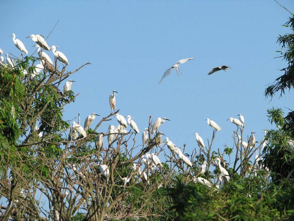Khu du lịch sinh thái Cần Thơ- vườn cò Bằng Lăng