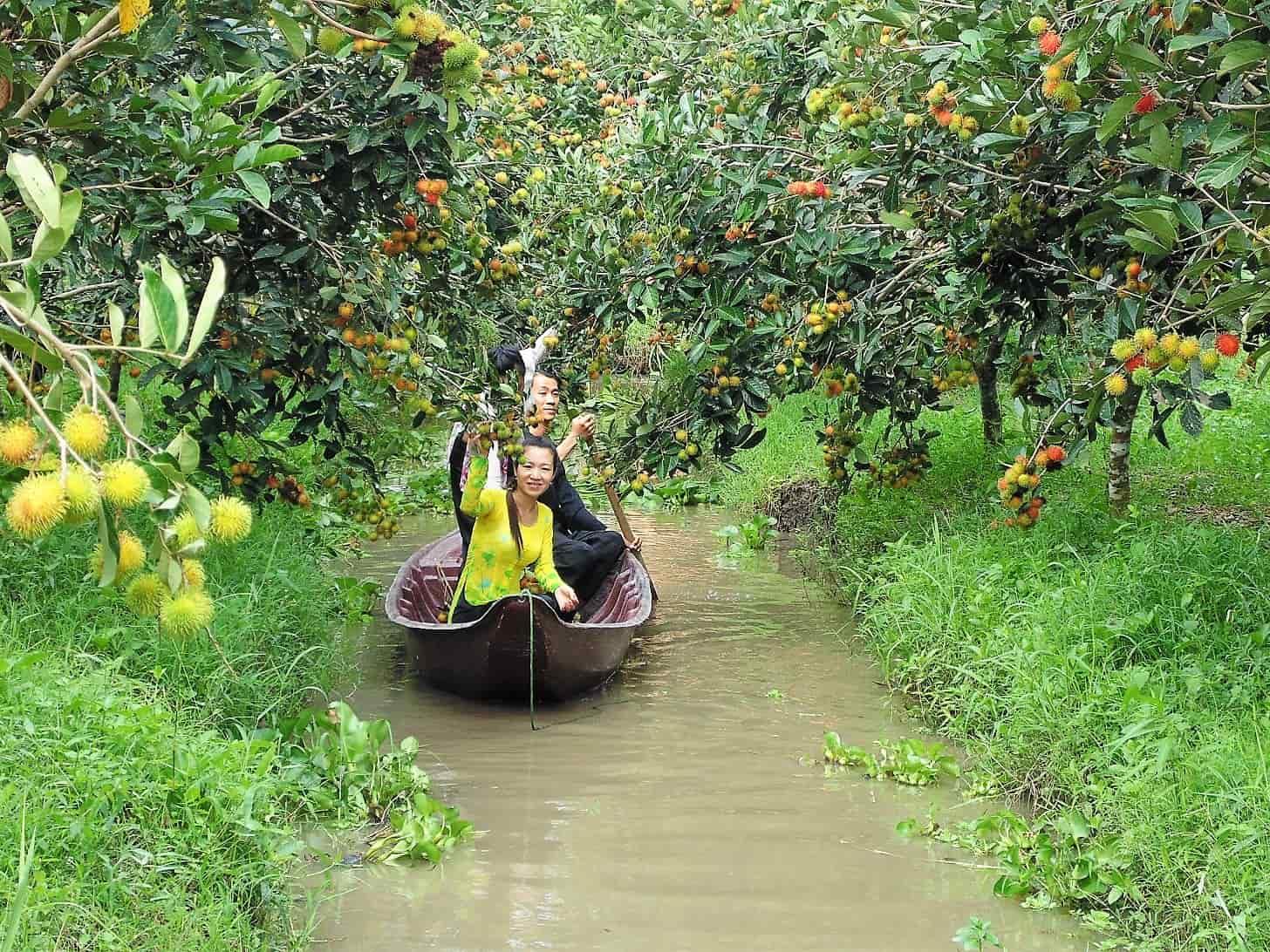 Vườn sinh thái Cần Thơ- trái cây 9 Hồng