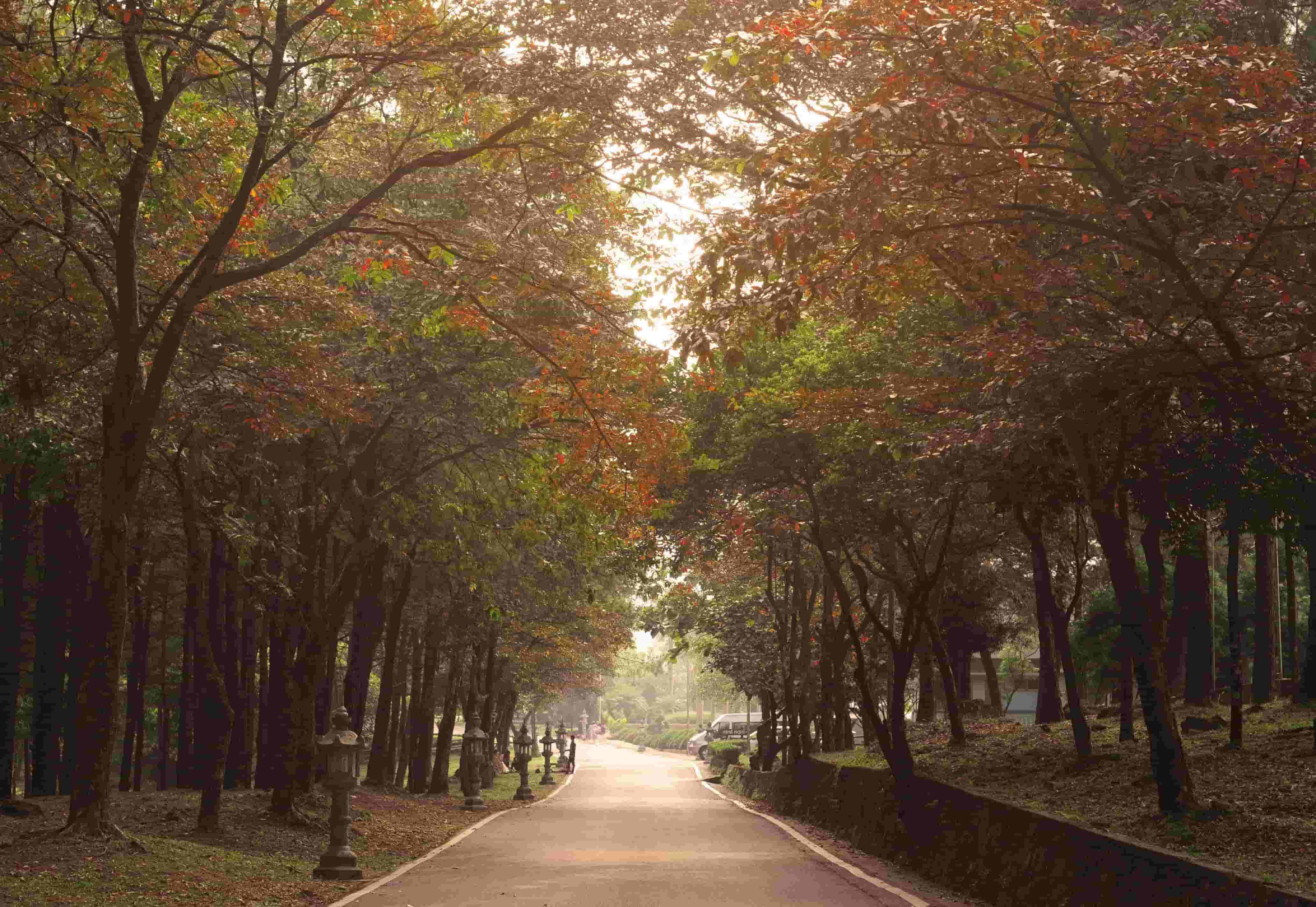 vườn quốc gia ba vì phù hợp để đi dã ngoại