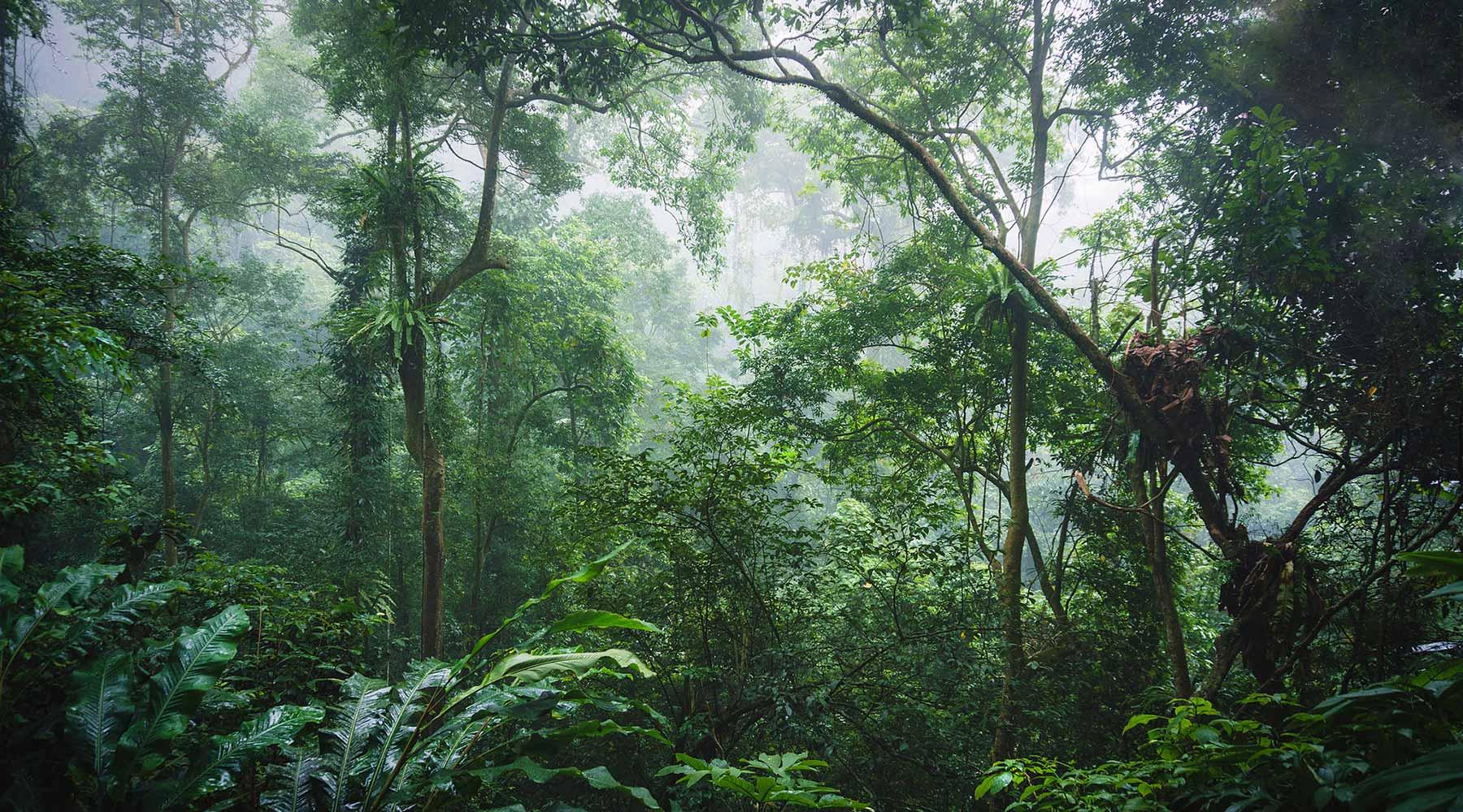 Vườn quốc gia Cúc Phương gần hà nội