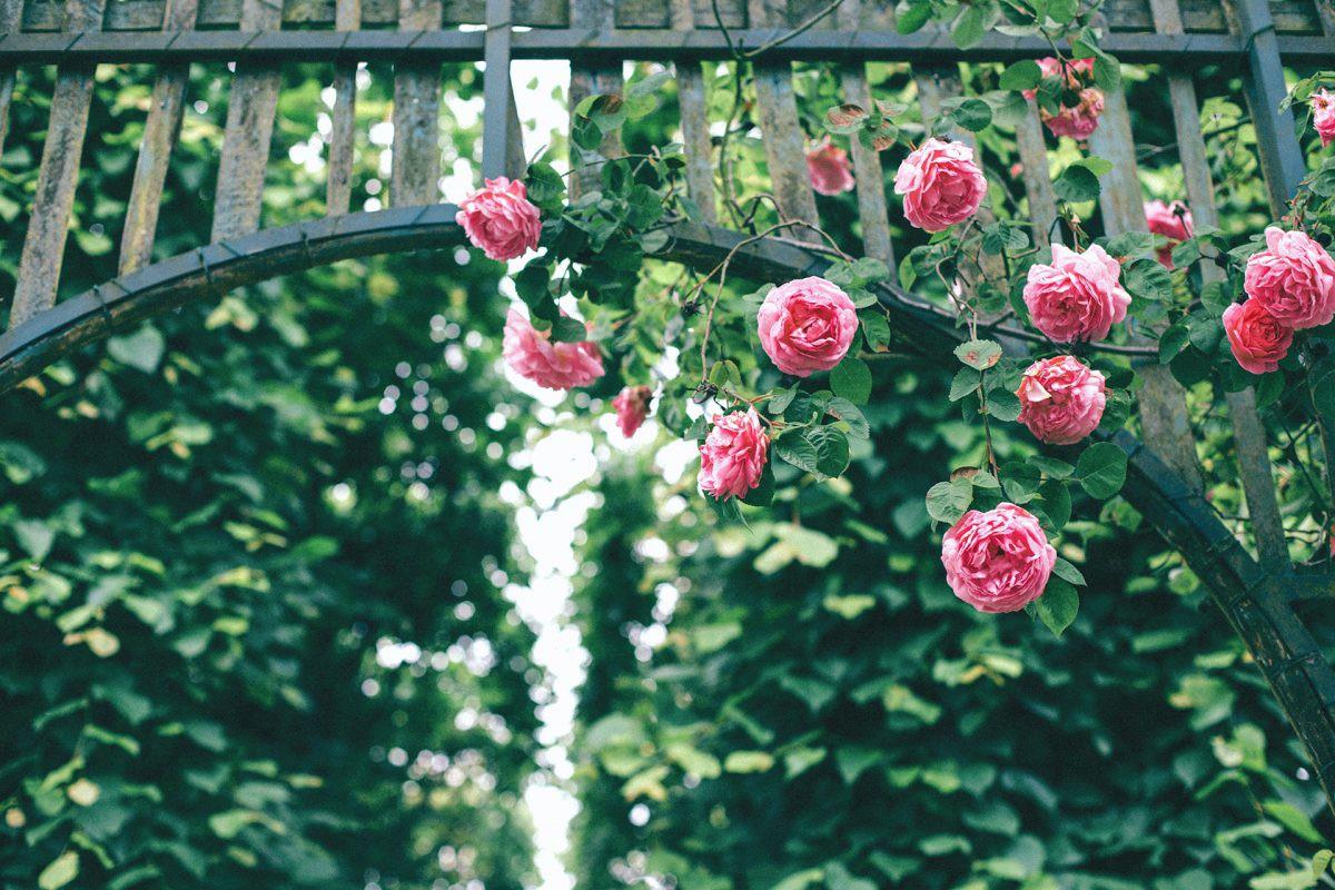 công viên hoa hồng khu du lịch sinh thái gần hà nội