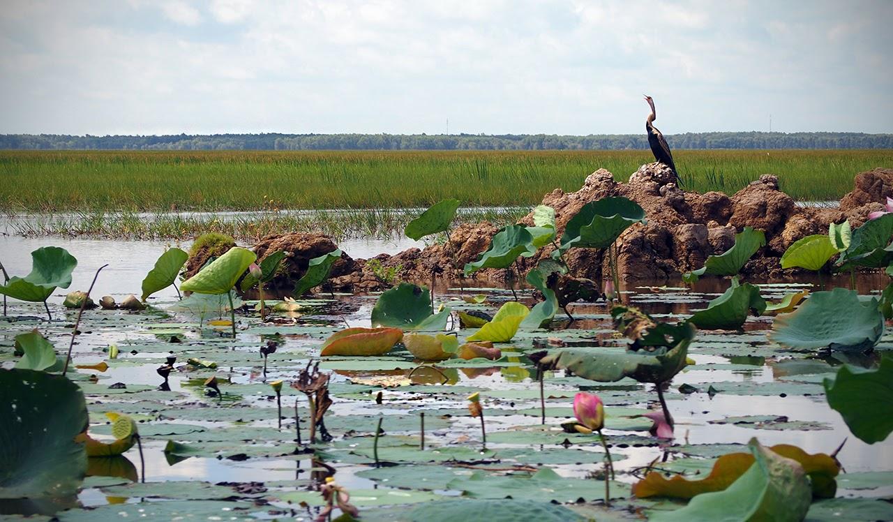 Vườn quốc gia Tràm Chim du lịch Đồng Tháp Mười