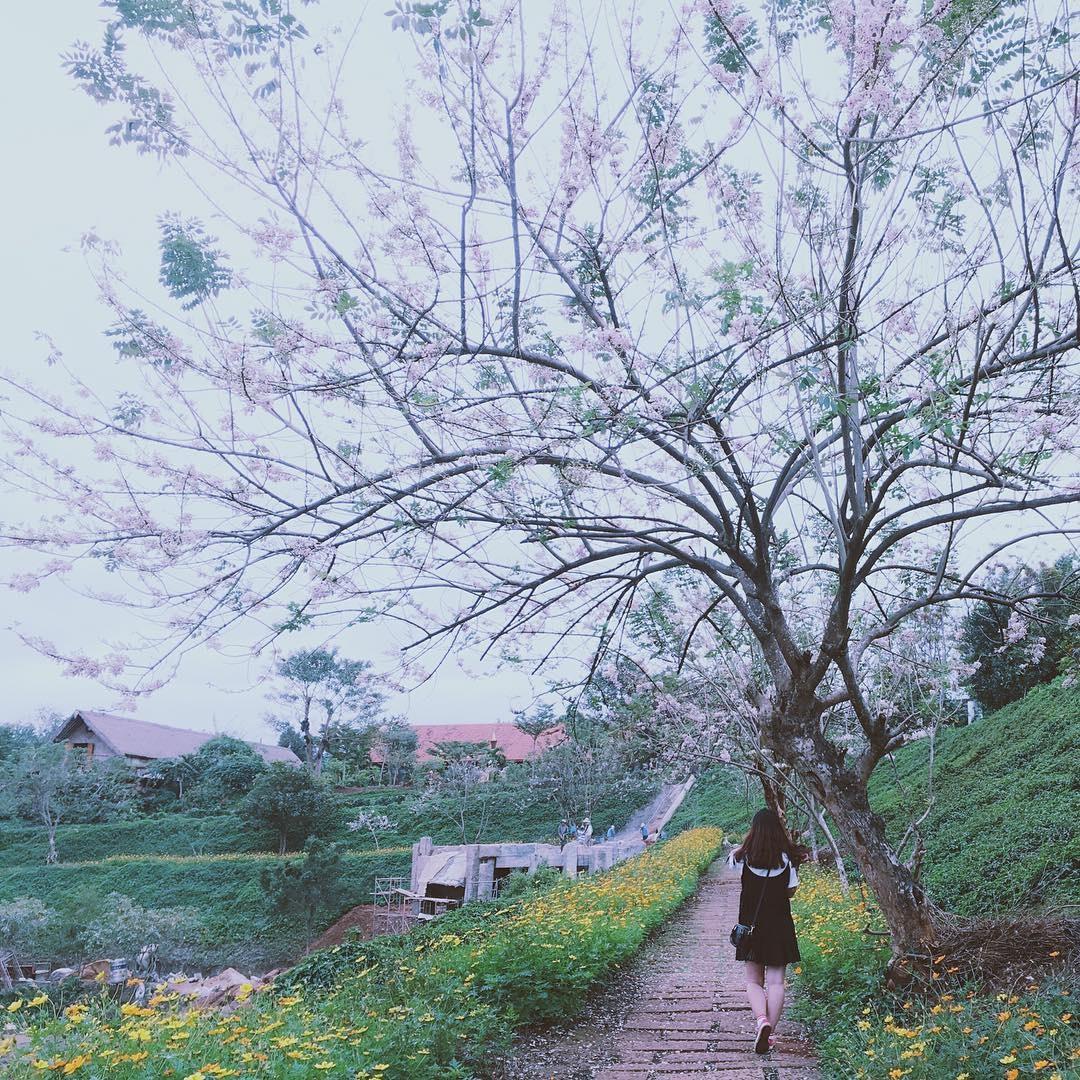 thiên nhiên khu du lịch kotam