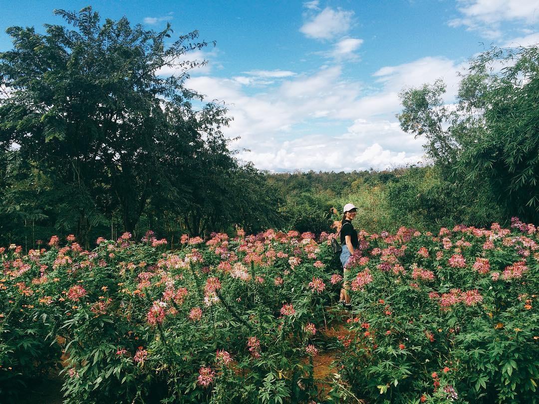 cánh đồng hoa khu du lịch sinh thái kotam