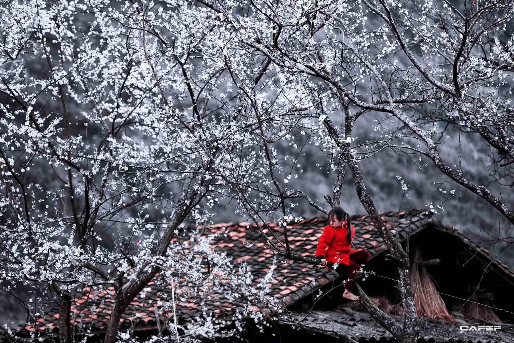 Cảnh đẹp mùa đông tại Hà Giang