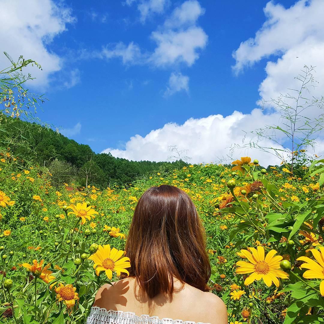 Địa điểm ngắm hoa dã quỳ Ba Vì