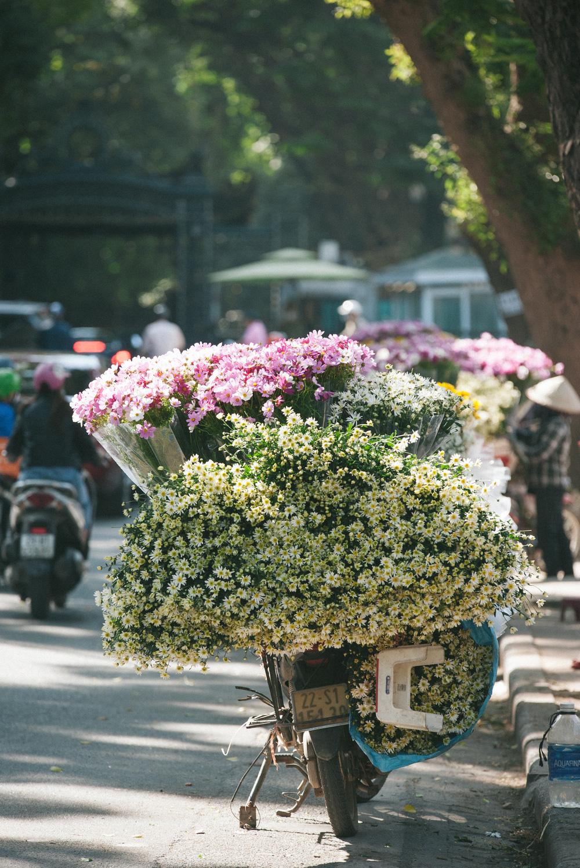 Checkin hoa cúc hoạ mi Hà Nội